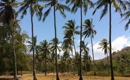 Tembowong Beach ( Lombok )